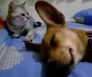 Hunden ligger och sover, men så plötsligt händer något som fick mig att Gapskratta!