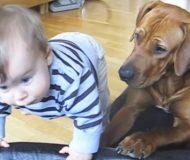 Pojken försöker låna hundens sovplats. Kolla in vad den gör då!