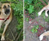 Hunden hittades fastbunden bland sopor ute i skogen. Strax där efter uppdagas den fruktansvärda sanningen.
