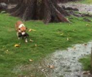 Hunden har precis blivit mamma, se det hjärtvärmande ögonblicket när hon räddar sin valpar från ovädret.