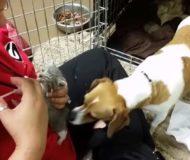 Djurskötaren försöker mata den hemlösa katten, men hunden bredvid har bestämt sig för något Helt annat!