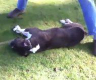 Hunden håller på att dö i hjärtstillestånd, men precis i sista stund ingriper en främling. Otroligt!