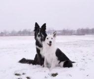 Hundarna förbereder sig för ett fotografi – men den till vänster kommer göra bilden oförglömlig!