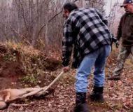 Vargen hade fastnat i en fälla i skogen. Kolla in hur det gick när den räddades!
