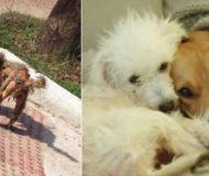 Bilden på den vanvårdade hunden spreds på Facebook, men när vi tittar lite närmre avslöjas en hemlighet!