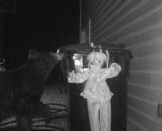 Björnen ska precis rota igenom familjens sopor men en överraskning väntar som får den att fly för livet!