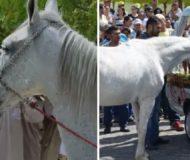 Hästens ägare ska begravas. Det som händer då är otroligt rörande att se!