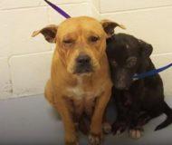 Hundarna blev dumpade av sin förra ägare. Idag har de bara varandra!