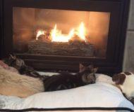 Katterna ligger och myser framför brasan. Plötsligt ropar matte från köket och då händer det grejer!