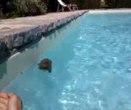 Sara upptäcker en drunknande igelkott i sin pool. Räddningsaktionen som följer är helt fantastisk!