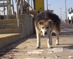 Hunden levde hemlös på gatan. Se vad som händer när den blir räddad!