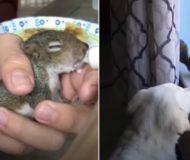 Ekorren överlevde stormen och blev omhändertagen. Nu är den bästa kompis med familjens hund!
