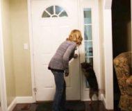I över 2 år har husse och hans hund varit separerade. Reaktionen när han kommer hem är helt fantastisk!