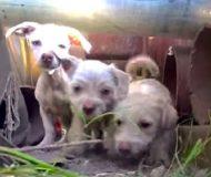 De blir kallade för att rädda en hemlös hund, men istället hittar de en hel familj!